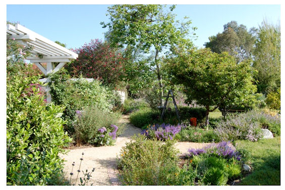 Southern california california native plant society blog for Native plant garden designs