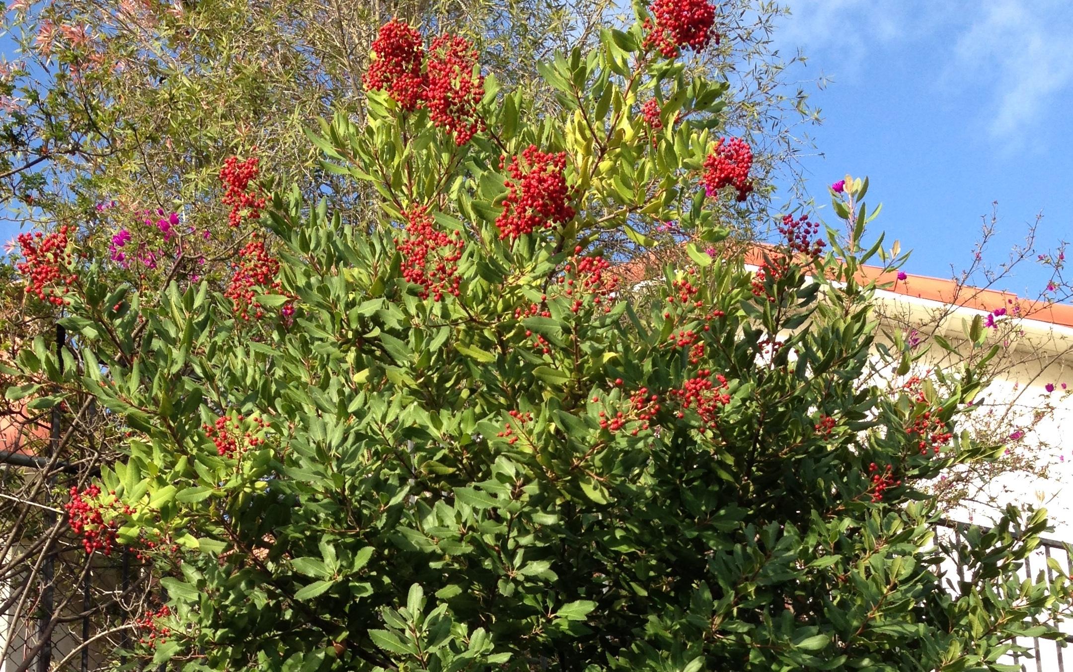 California Native Plant Society Dedicated To The