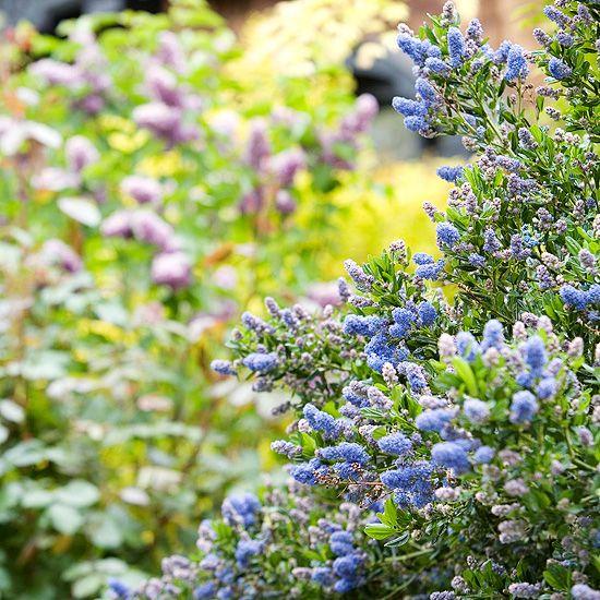 California Native Plant Landscape Design Examples: California Native Plant