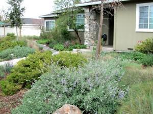 Agi Kehoe Mercury News native garden
