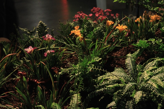 Native Plants Featured At The San Francisco Flower And