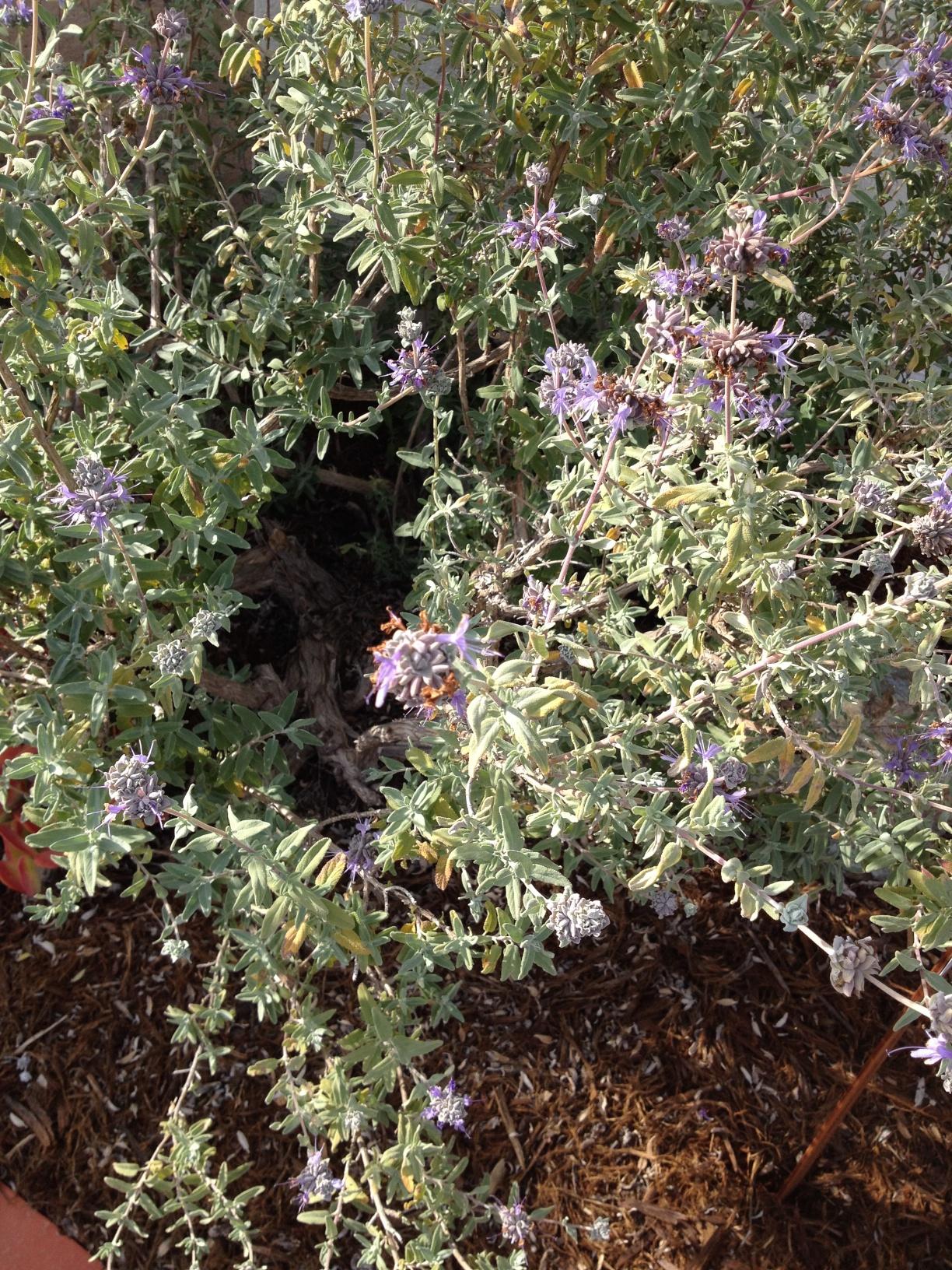 Garden Native Tour Was A Success California Native Plant Society Blog