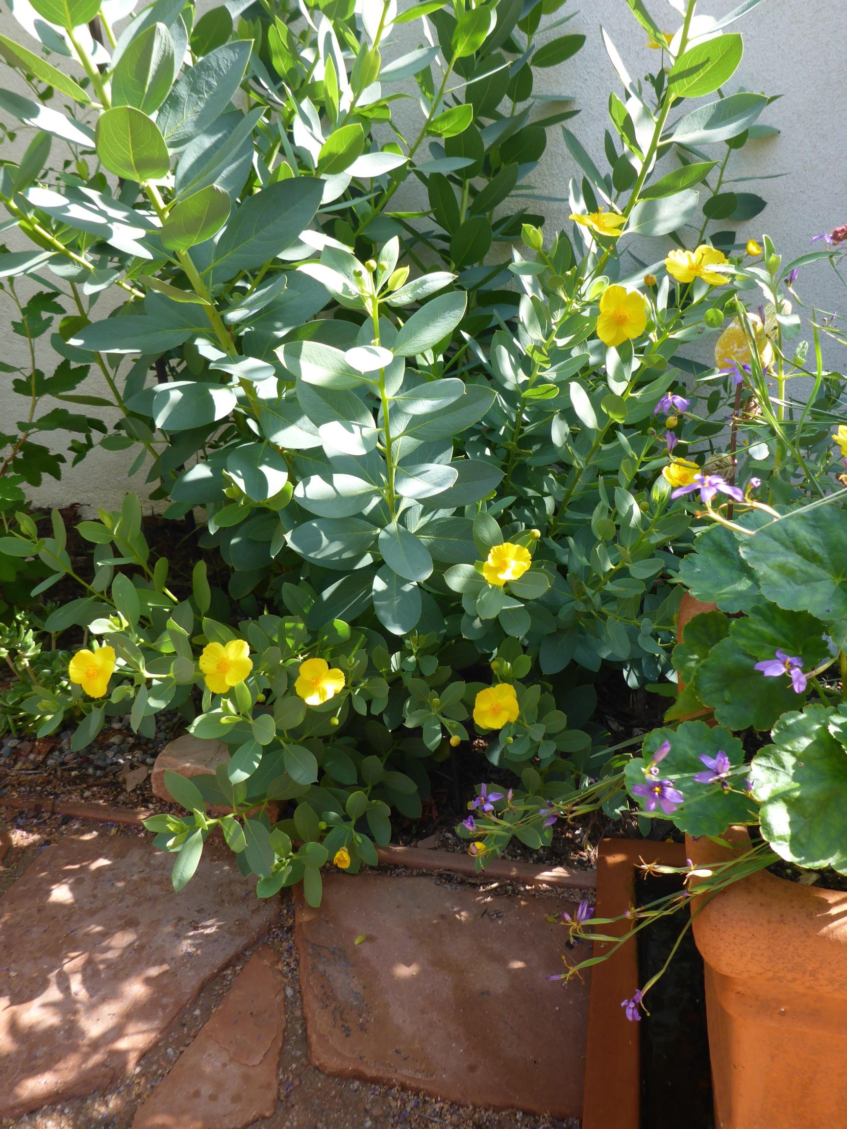 San Diego California Native Plant Society