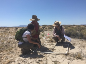 Sampling using nested quadrats. CNPS Measuring & Monitoring workshop, Mojave National Preserve, May 2016. Becky Reilly Photo