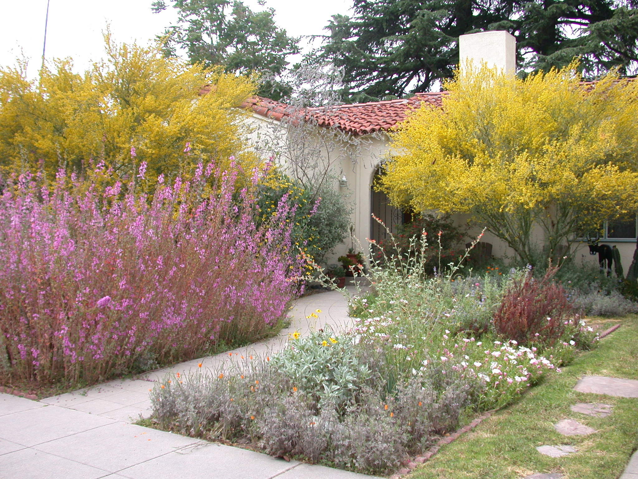 Habitat Gardening California Native Plant Society Blog