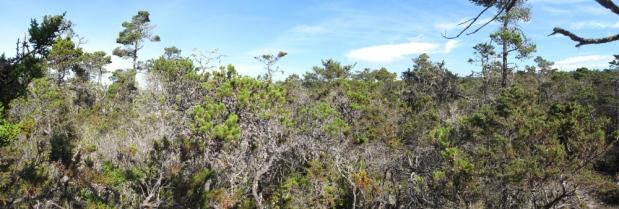 Plant Exploring: MendocinoCounty