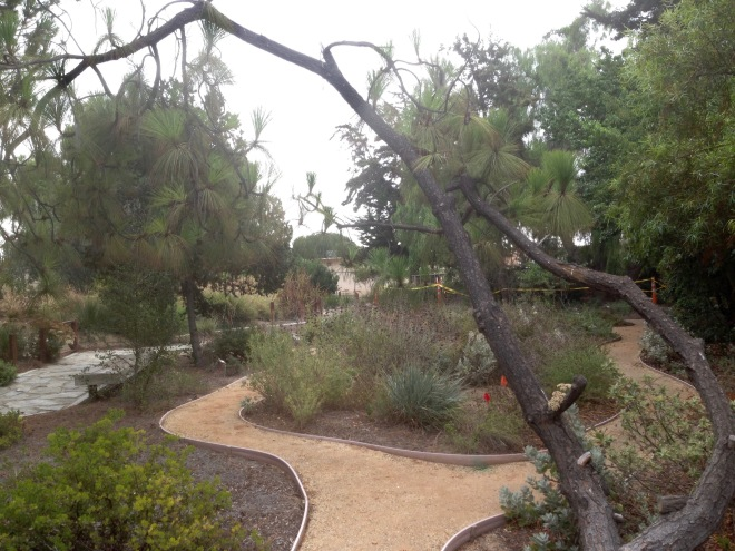 A view of South Bay Botanic Garden