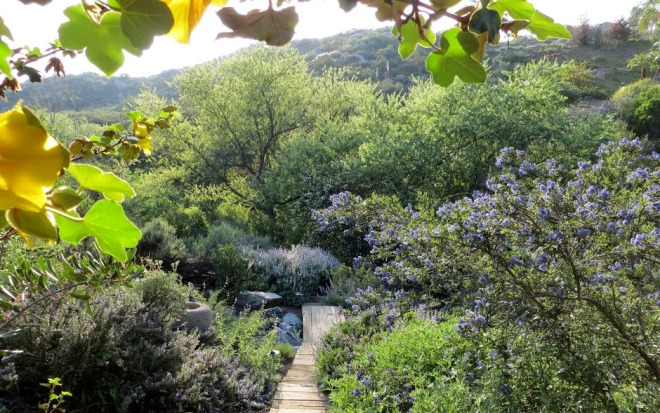 A California native plant oasis