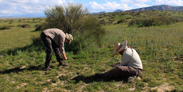 Botanists in the field.