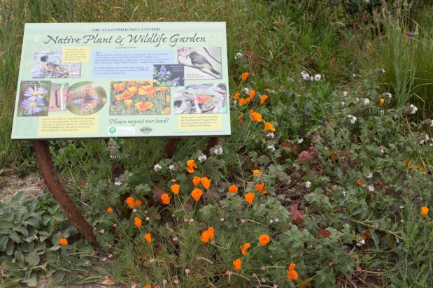 Arcata Community Center Native Plant and Wildlife Garden