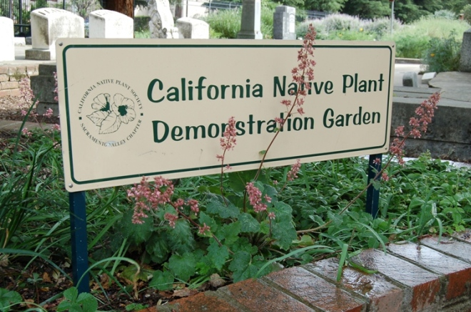 California Native Plant Society Blog Dedicated to the