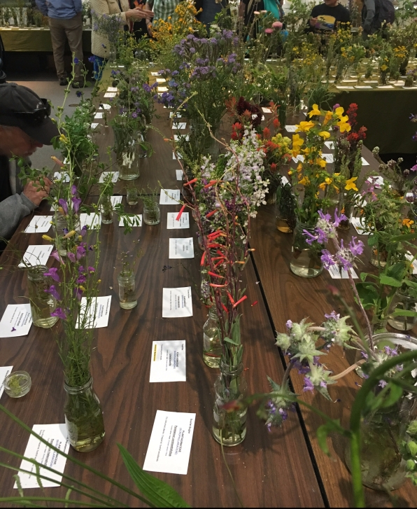 Monterey Wildflower show specimens