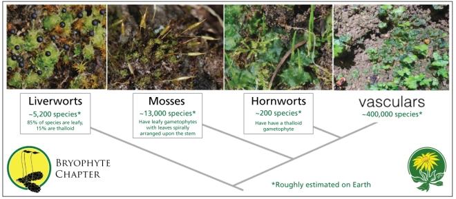 Bryophytes-Lichens-Liverworts