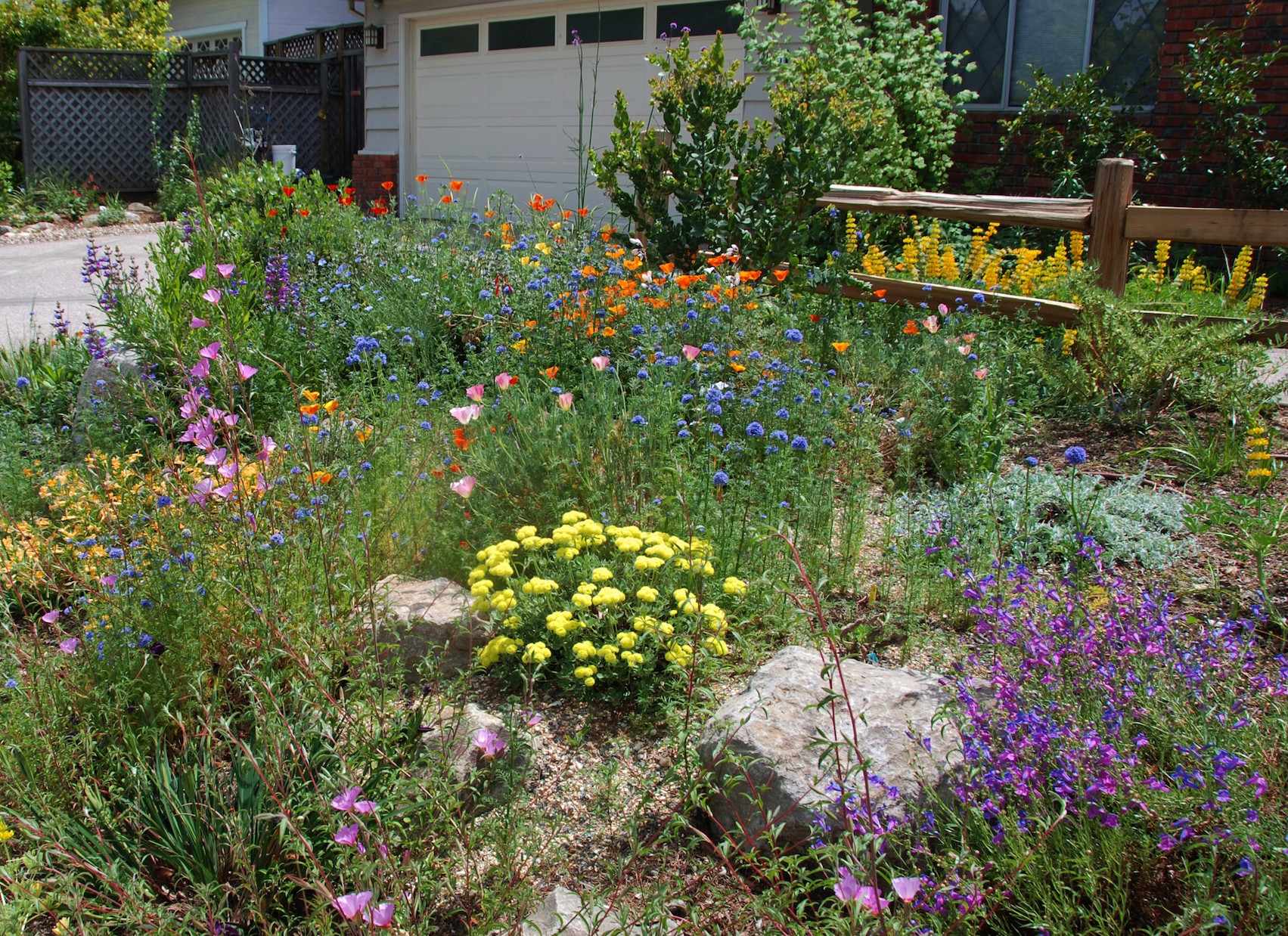 Garden design california native plant society blog for Design your back garden